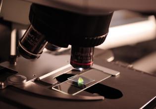 Avanços no tratamento da Pseudomonas aeruginosa em pacientes com Fibrose Cística