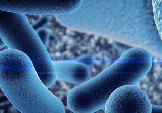 Estudo indica que bactérias S. pseudopneumoniae podem causar exacerbações pulmonares em pessoas com Fibrose Cística